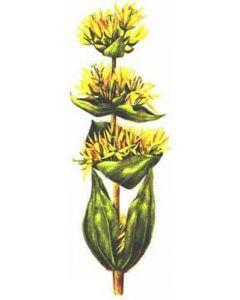 Spirituosen-Aroma Natürliches Enziankonzentrat